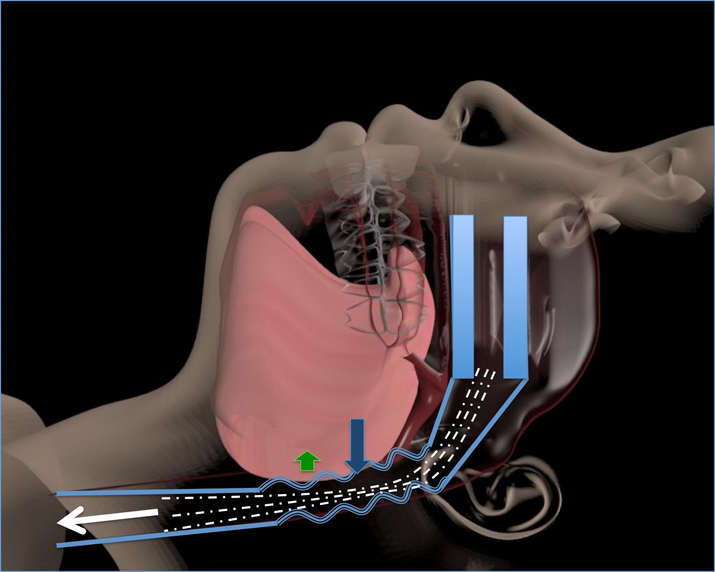 L'air vibre en passant au niveau du pharynx, c'est le ronflement.